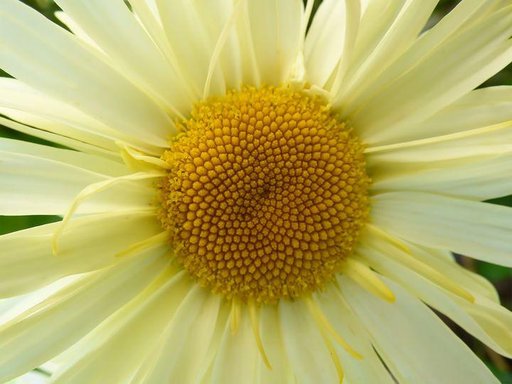 Mellow Yellow - Leslie Montgomery