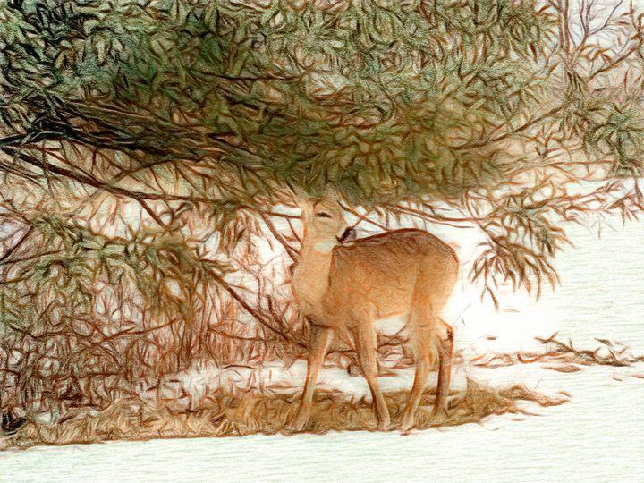 A Dear Little Deer - Leslie Montgomery