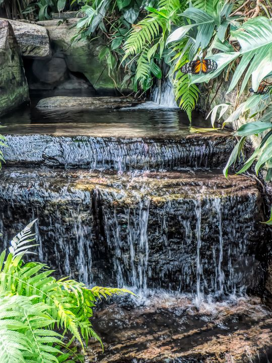Tropical Waterfall With Butterflies - Leslie Montgomery