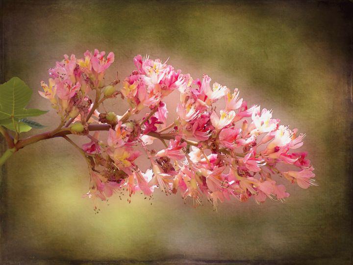 Horse Chestnut Branch - Leslie Montgomery