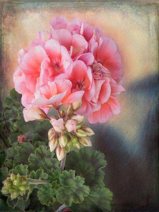 Pretty In Pink - Leslie Montgomery