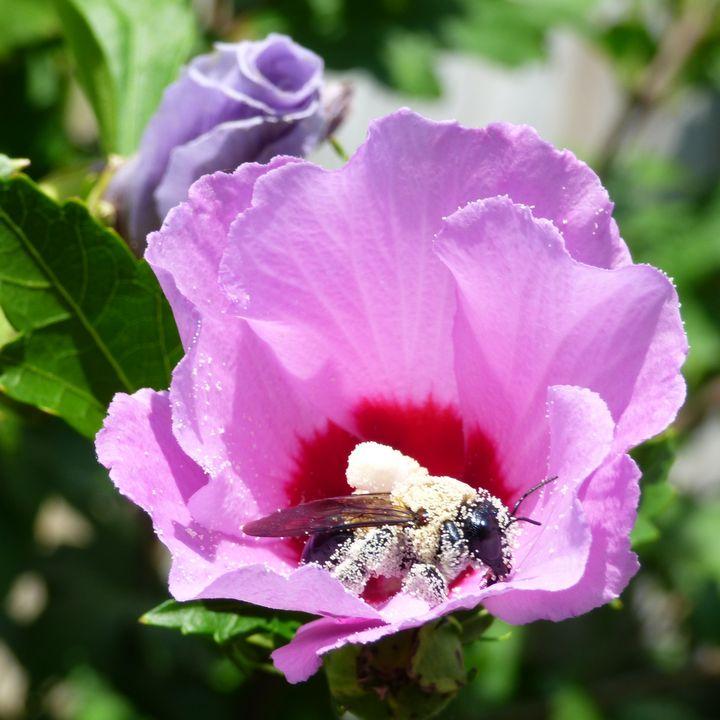 Pollination - Leslie Montgomery
