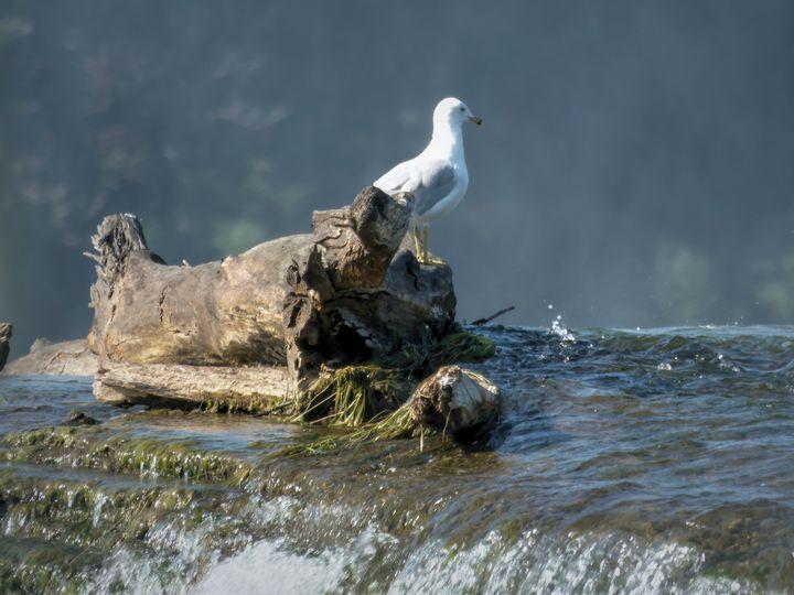 Water Watching - Leslie Montgomery
