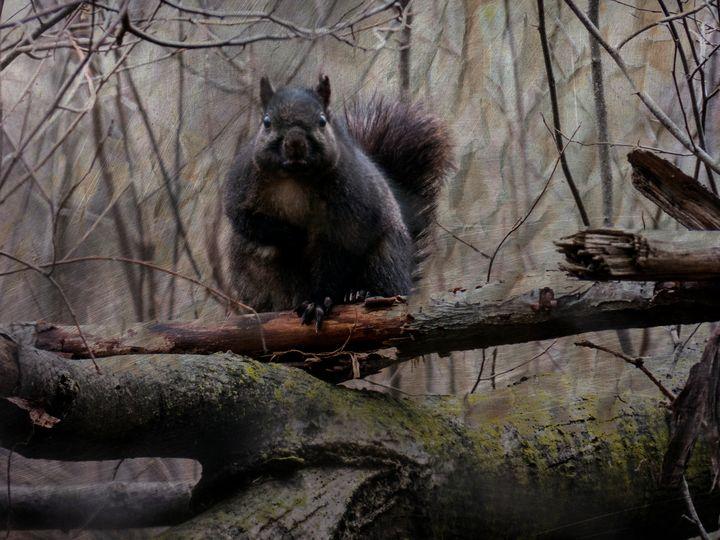 Grumpy Squirrel - Leslie Montgomery
