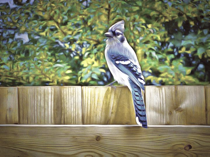 King Of The Blue Jays - Leslie Montgomery