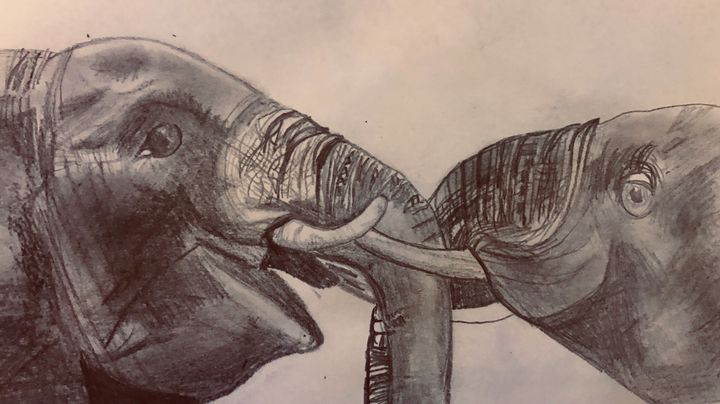 Elephant Union - SterlingRose