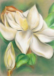 Magnolia Blossom and Bud