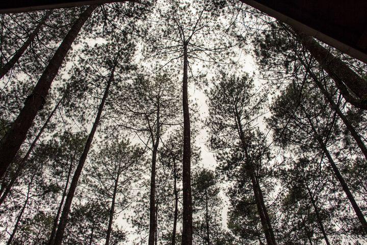 Bandung Forest Cikole - Trihand Art