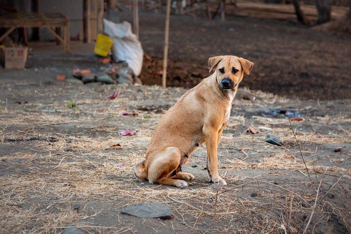 TrihandArt Brown Female Beach Dog - Trihand Art