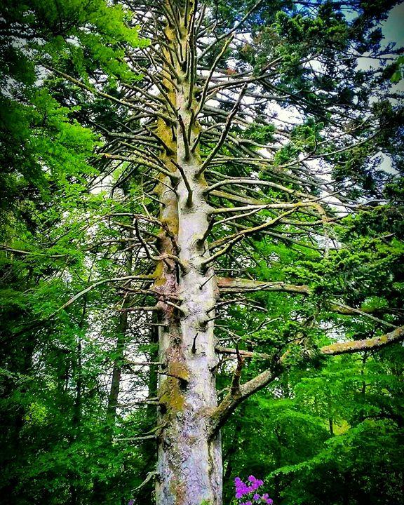 My favourite tree. - David Travers