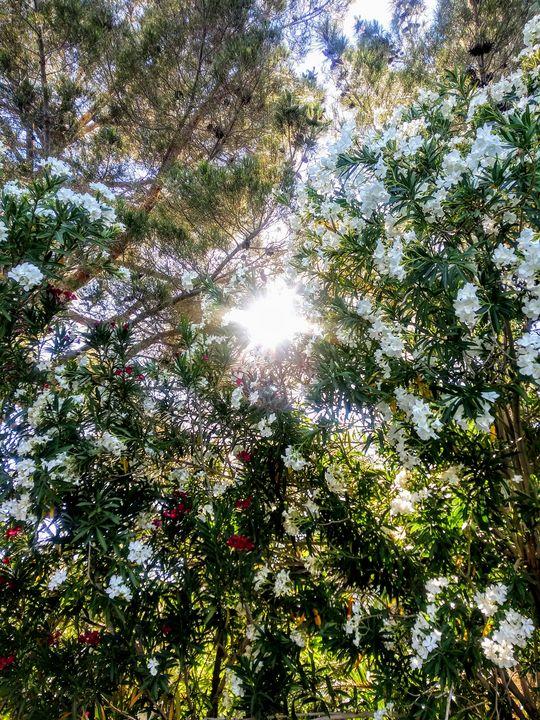 'Heavenly Flowers' - JonteTheArtist