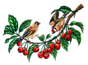 Goldfinches and cherries