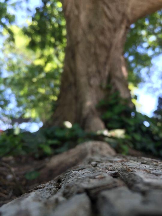 Roots - Nicholas Beam
