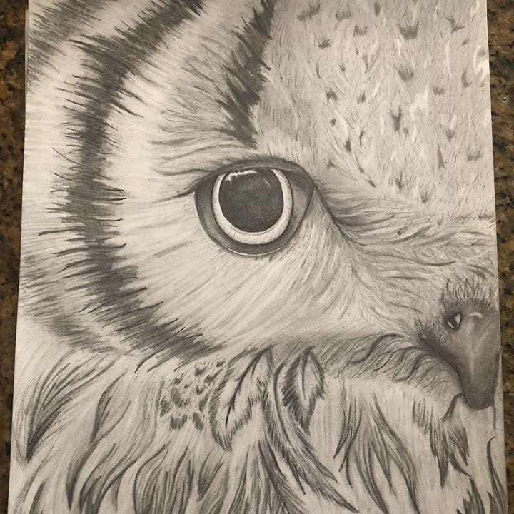 Close up owl - Miranda