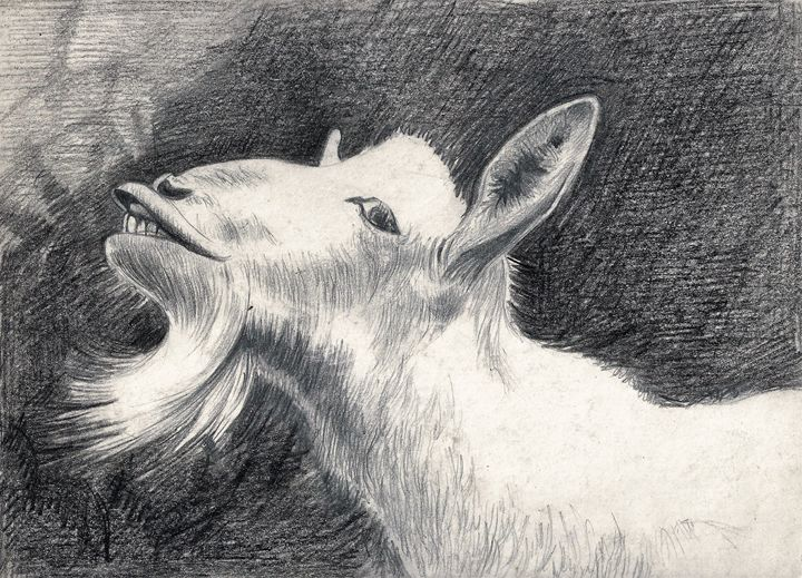 'It Wasn't me ' By Winifred Francis - PowysArt