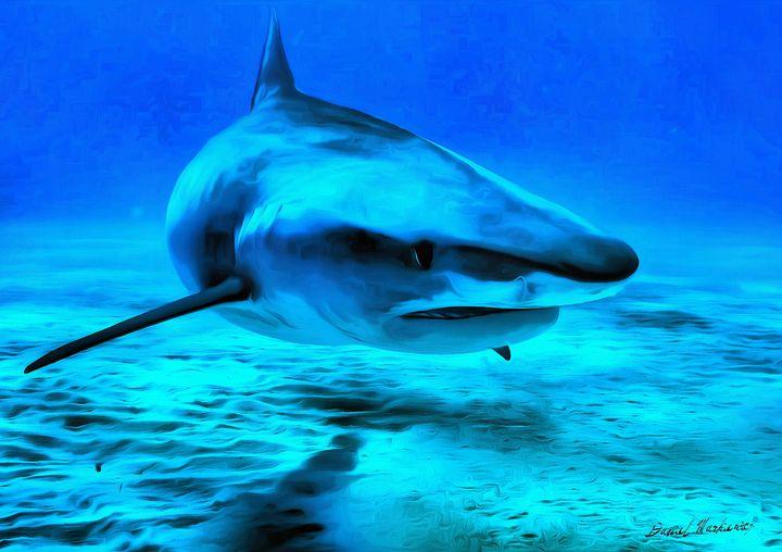 Tiger Shark - Daniel Markiewicz