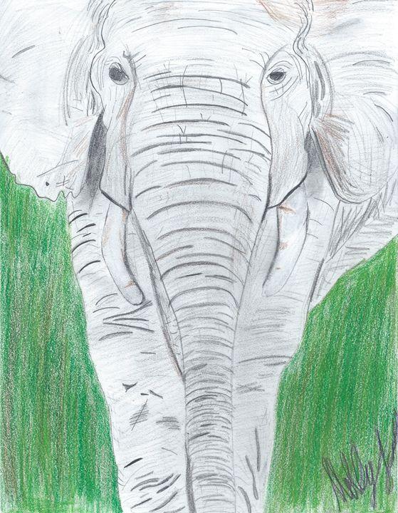 Elephant - Molly jackson