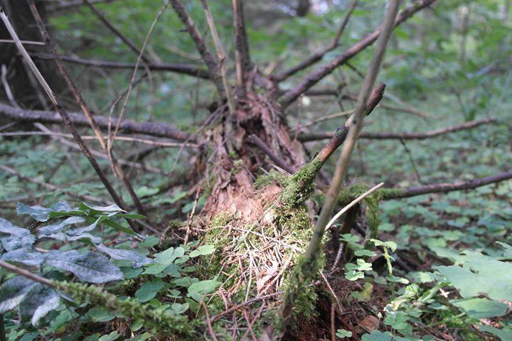 Old log - Vaidoto art