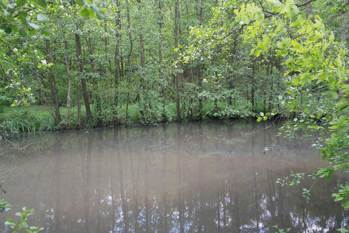 A swamp - Vaidoto art