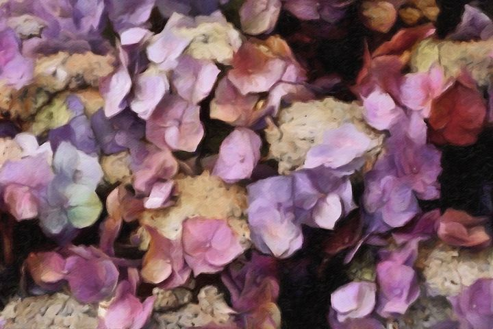 Vintage Hydrangea - Susan Maxwell Schmidt Visual Fine Art