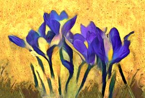 Purple Spring Crocus - Susan Maxwell Schmidt Visual Fine Art