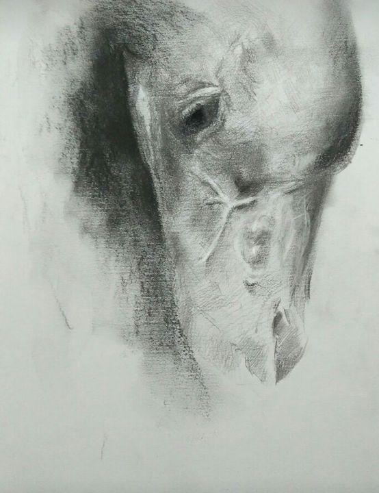 Horse head - Parthfineart