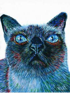 Siamese Cat Selfie