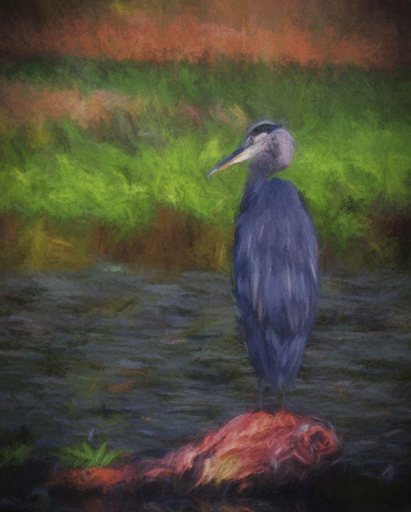 Heron's Gaze - Stefan Roberts