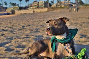 Doggy Beach Day