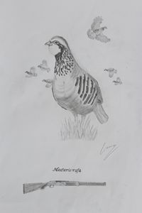 Red Partridge: Alectoris rufa - Animals