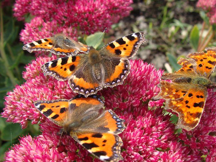 Butterflies - EarthArt