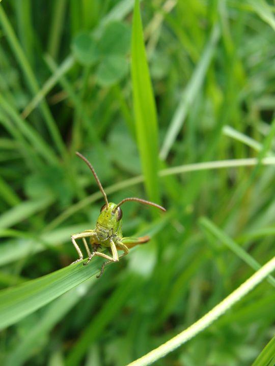 Grasshopper - EarthArt