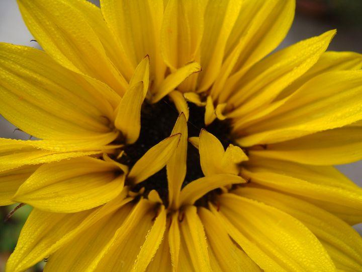 Sunflower - EarthArt