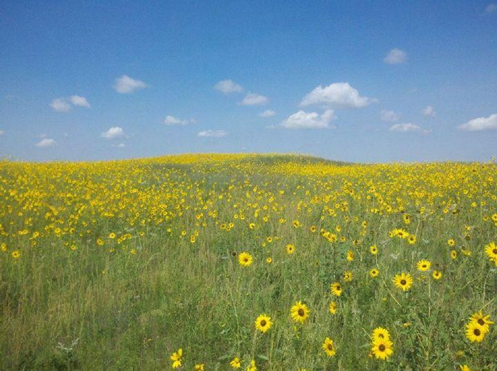 Prairie Dream - Where the Wild Things Grow