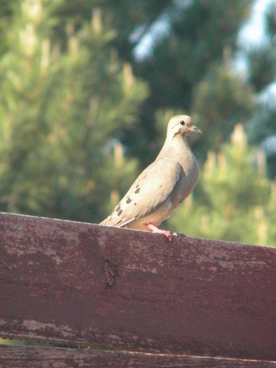 Birdy - Where the Wild Things Grow