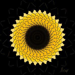 Radial Sunflower HL