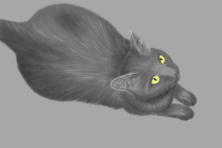 Russian Blue Cat - Jayden Owens