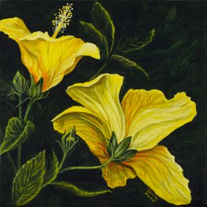 Two Hibiscus