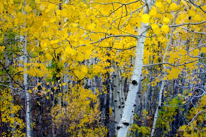 Autumn Gold - JB's Imaging Studio