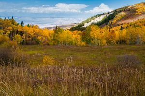 A Colorado Autumn Scape