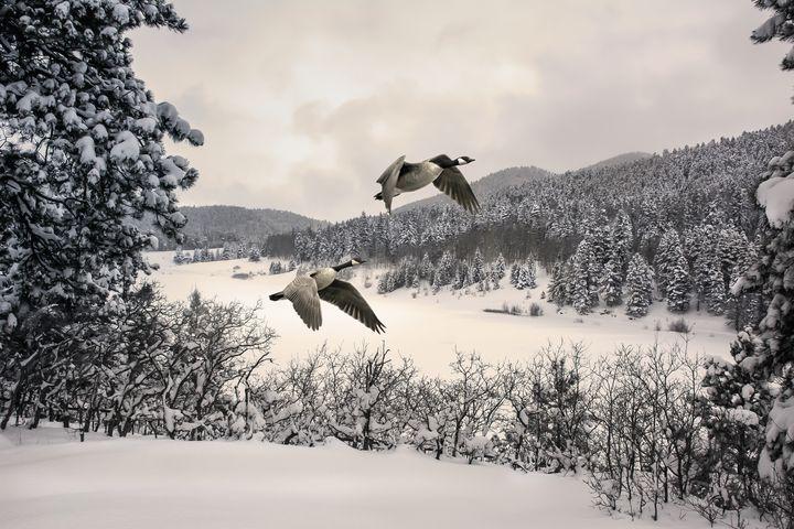 Wintry Flight 1 - JB's Imaging Studio