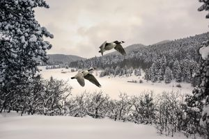 Wintry Flight 1