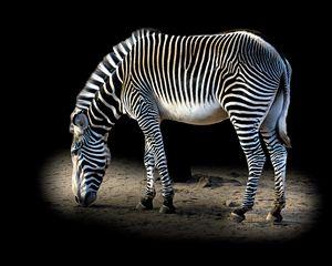 Magical Zebra Stripes