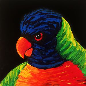 Australian Rainbow Lorikeet Colorful