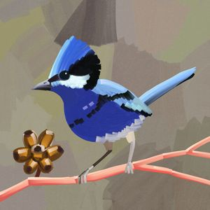 Blue Fairy Wren Australian Bird Pain