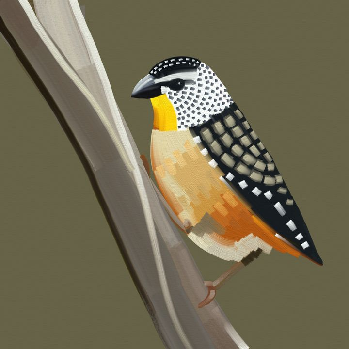 Spotted Pardalote Australian Bird - Luke Dwyer