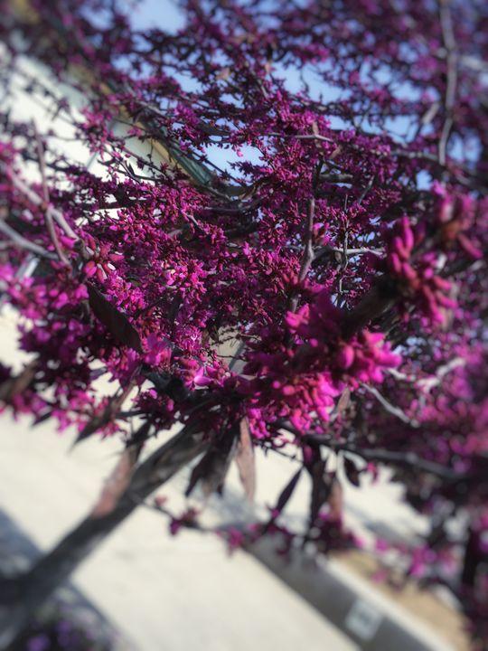 Tree - April Lisette