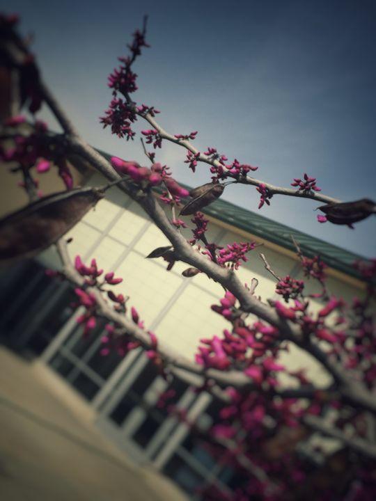 Nature - April Lisette