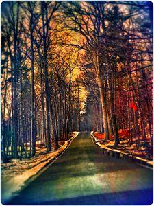 dream tree drive