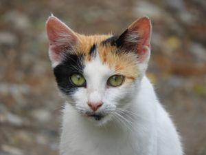 Beautiful starry cat portrait